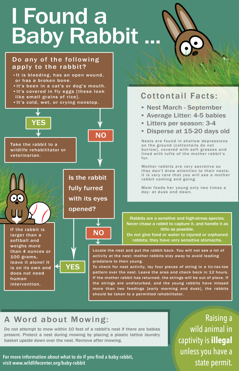 Flowchart if you found a baby bunny