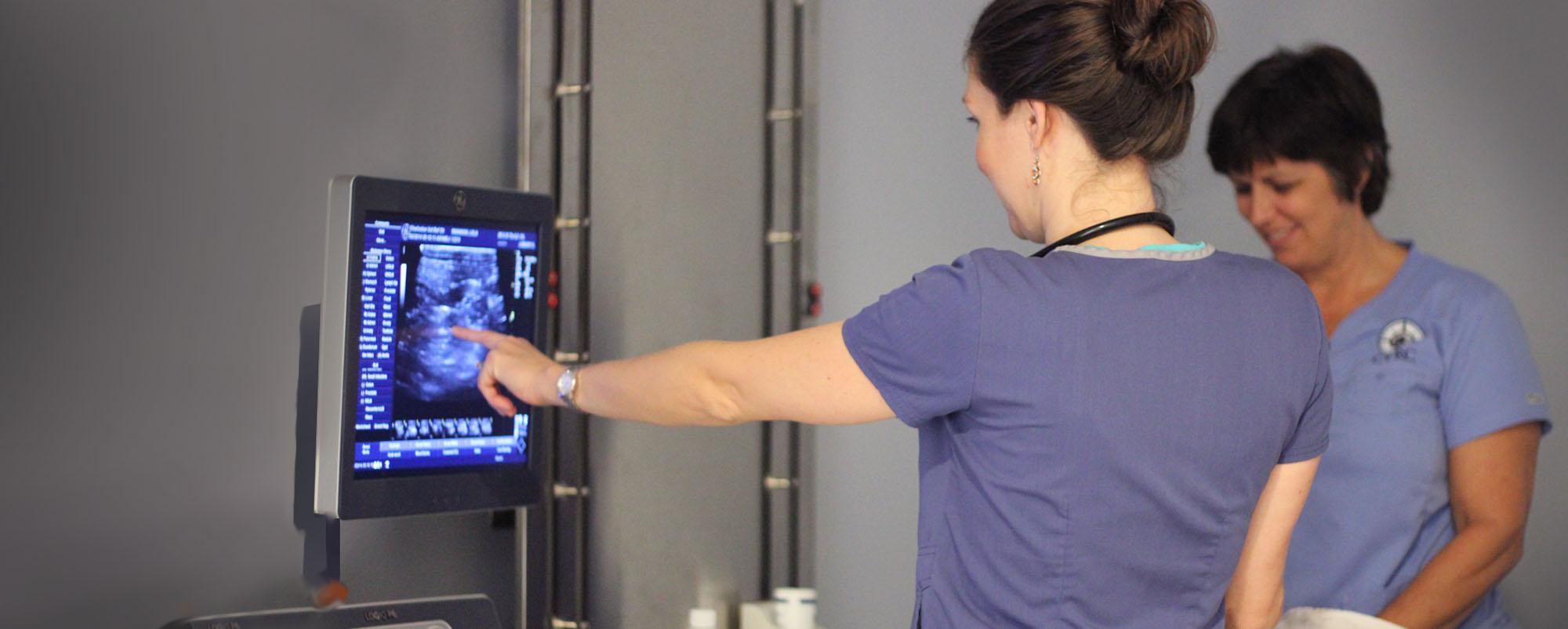 Critical Care Services at Charleston Veterinary Referral Center